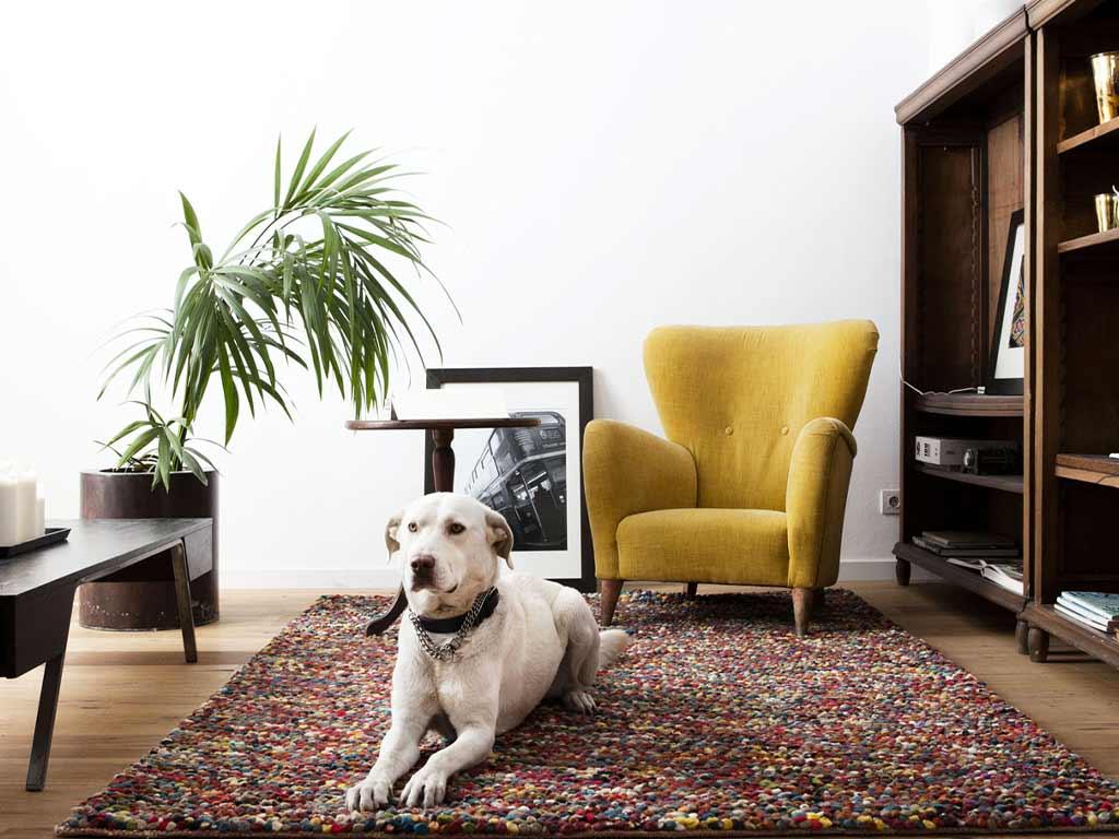 Pulizia tappeti per il cattivo odore degli animali domestici